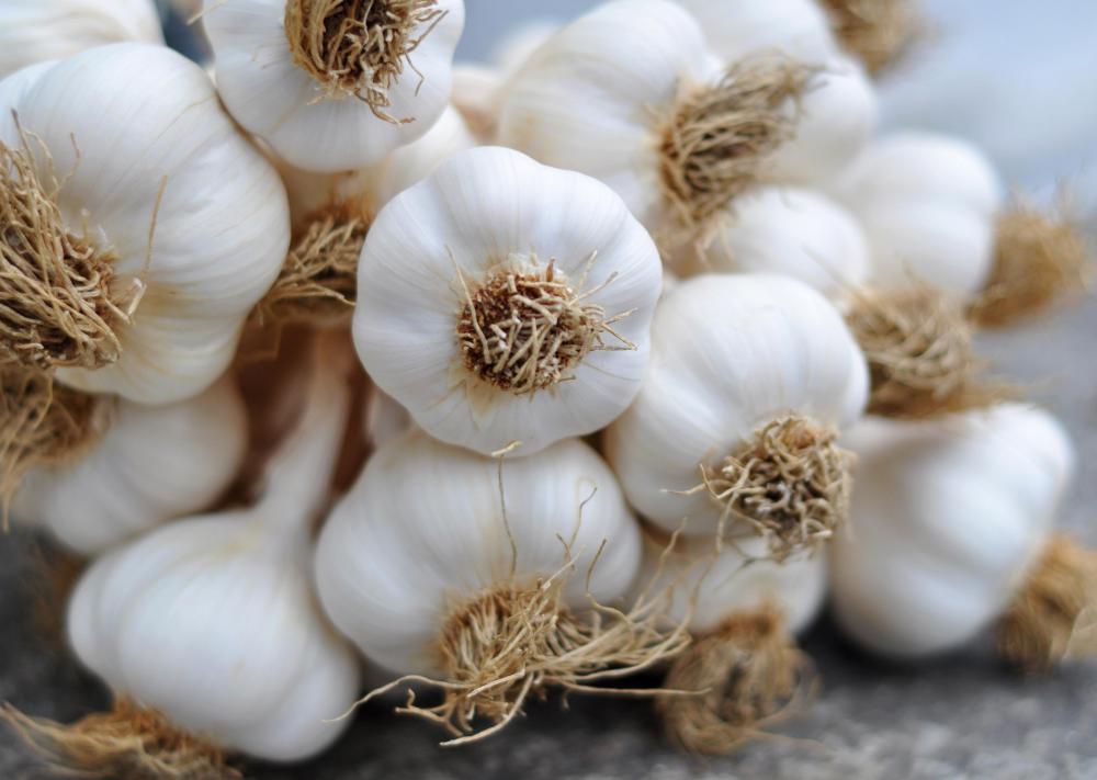 Garlic may be used to repel mosquitos.