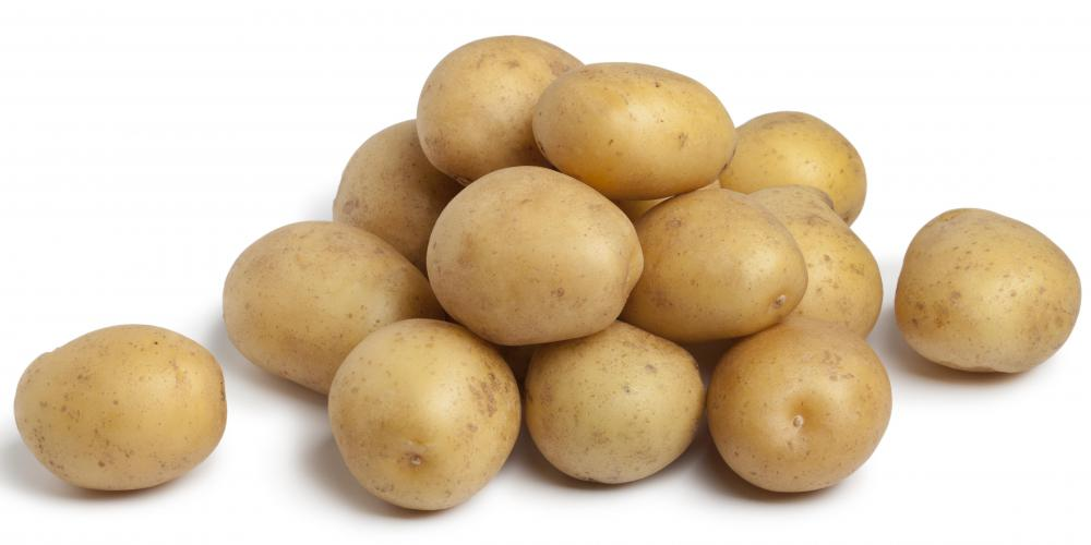 Genetically-modified potatoes varieties with amylopectin have been developed.