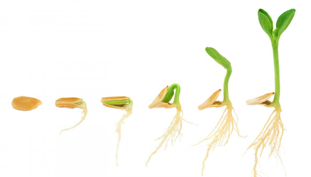 Successful Seed Germination Depends On A Variety Of Factors Including Soil Mixure And Temperature Levels