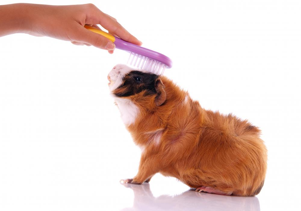 Pet grooming is a necessity for some pets' proper daily functions.