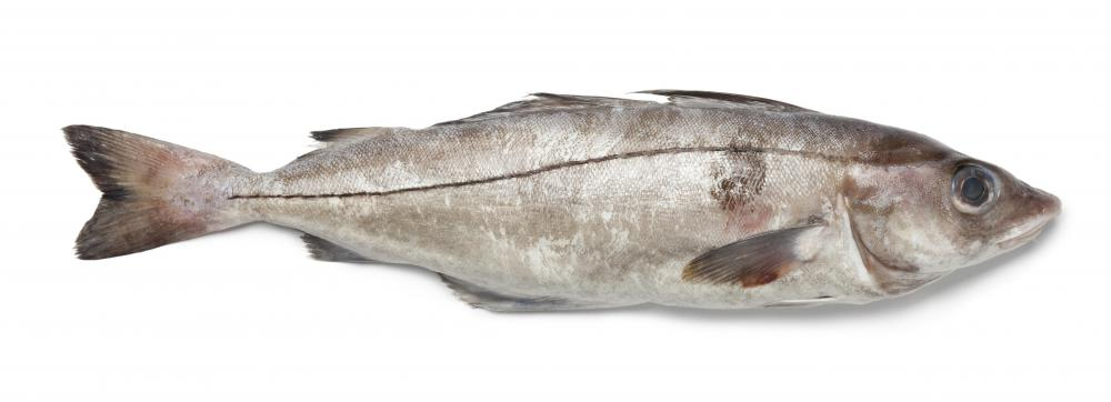 Over-cooking haddock can cause it to fall apart.