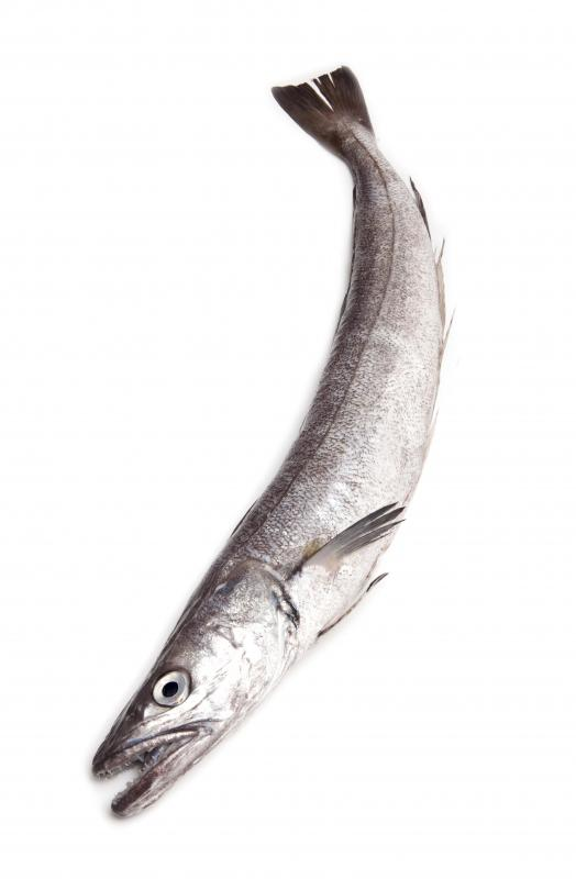 Hake may be used in fish stew.