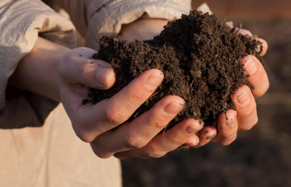 Soil should be prepared with a light fertilizer before planting radishes.