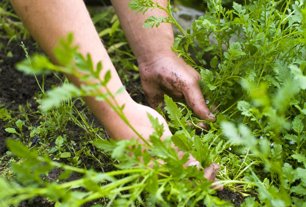 A weed hoe can be more effective than removing weeds by hand.