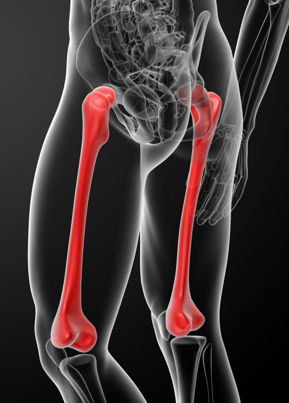 The femur bone articulates with the pelvic bones of the hip.