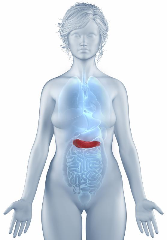 The pancreas releases glucagon and insulin, two hormones that help to regulate blood sugar levels.