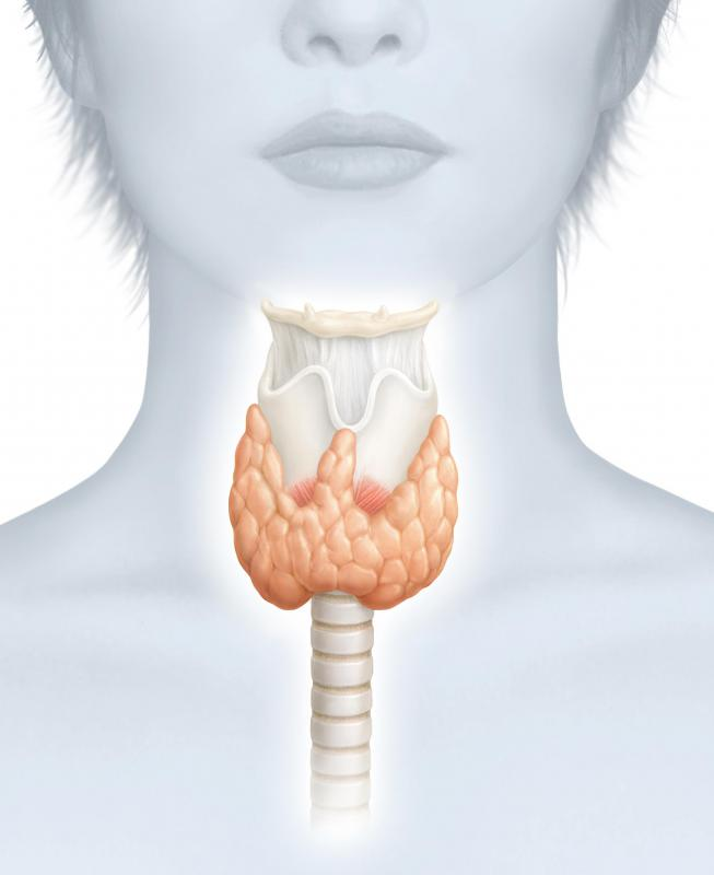 An underactive thyroid may cause weight gain, decreased energy, and low metabolism.