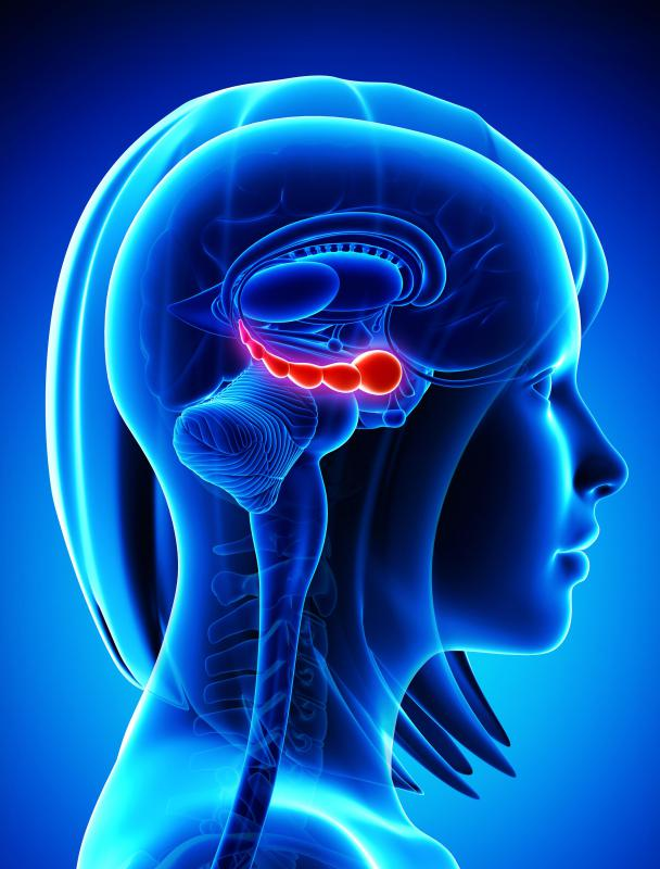 The hippocampus is part of the temporal lobe and is involved in both short-term and long-term memories.