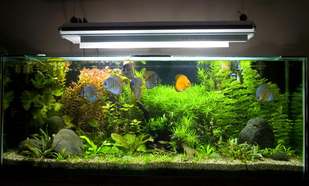 Tropical fish usually need to be kept within a specific temperature range.