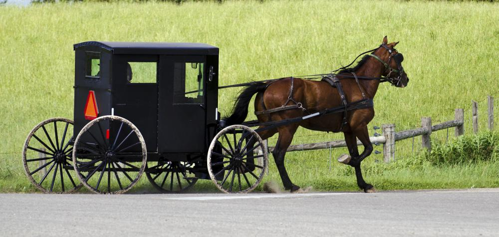Old-Order Mennonites live simply and reject modern technology, such as automobiles, and instead travel by horse and buggy.