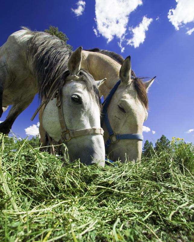 Horses are often raised on livestock farms.