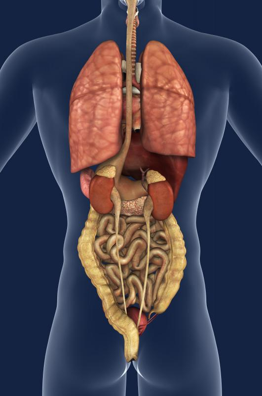 Problems with the intestines may occur as a result of Hermansky-Pudlak syndrome.