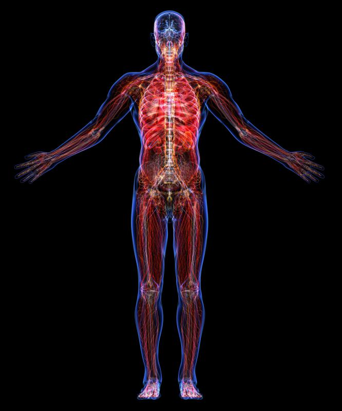 The human circulatory system is responsible for transporting nutrients, water and oxygen throughout the body.