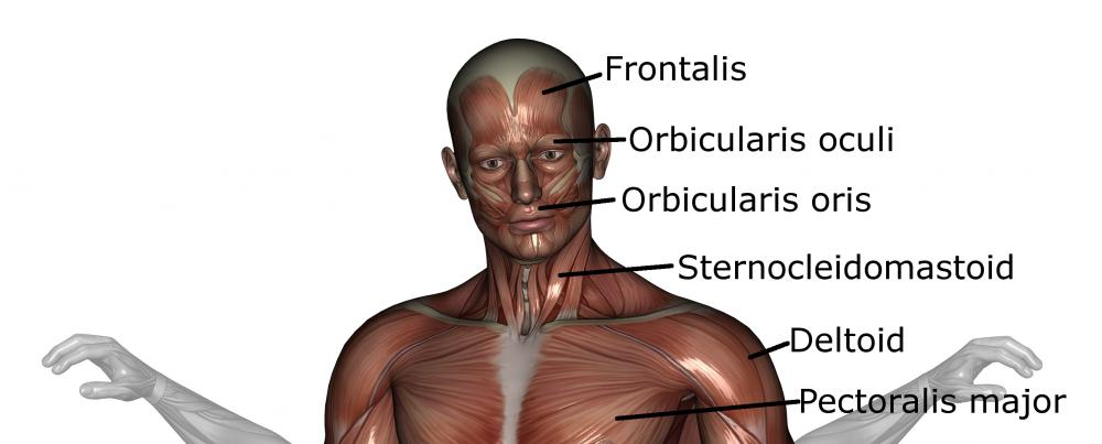 What is the Orbicularis Oculi? (with pictures)