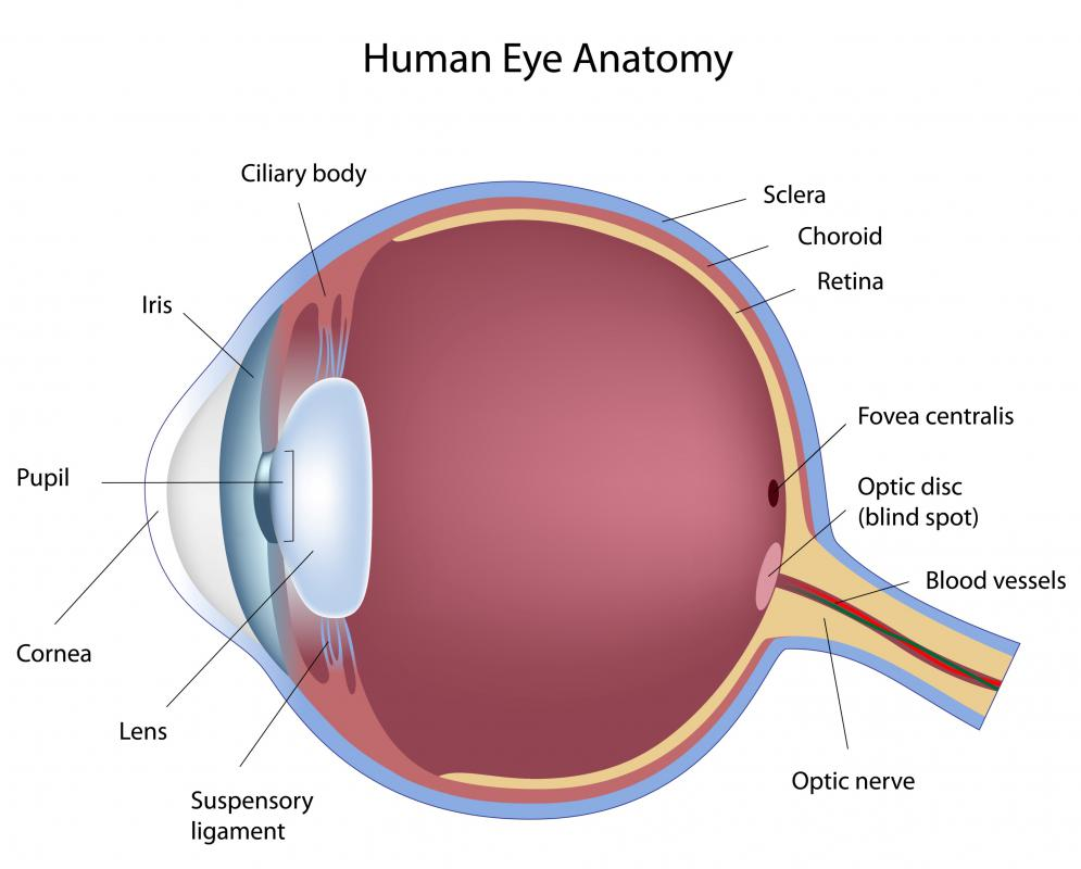 What Is The Anatomy Of The Eye With Pictures
