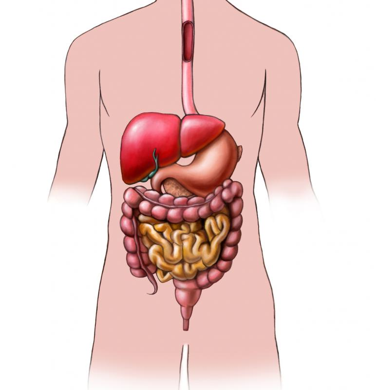 what does gastric juice break down