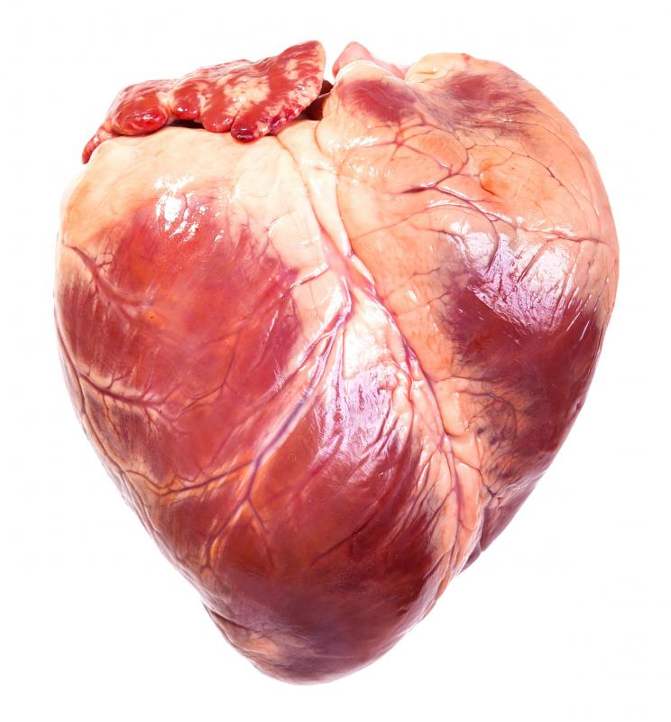 A beating heart is one of the best examples of an involuntary muscle.