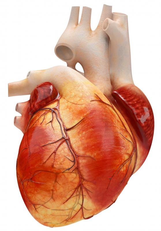 what is viral cardiomyopathy? (with pictures), Skeleton