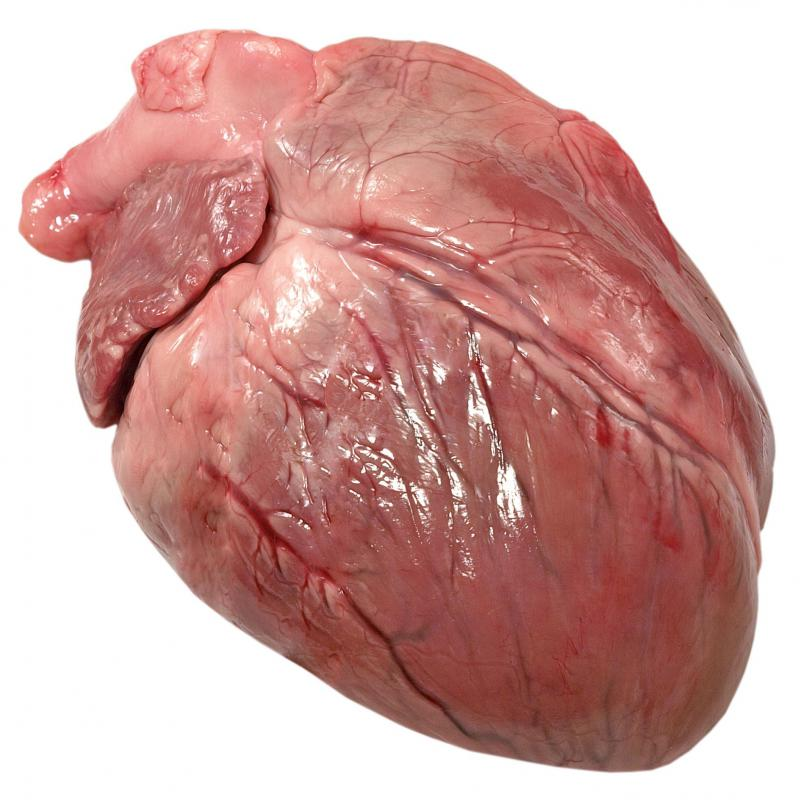 The human heart pumps blood through the circulatory system.