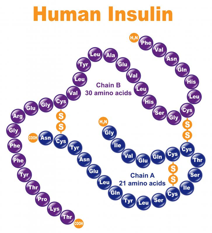Insulin is responsible for returning blood sugar levels to normal after eating, ensuring the body retains homeostasis.