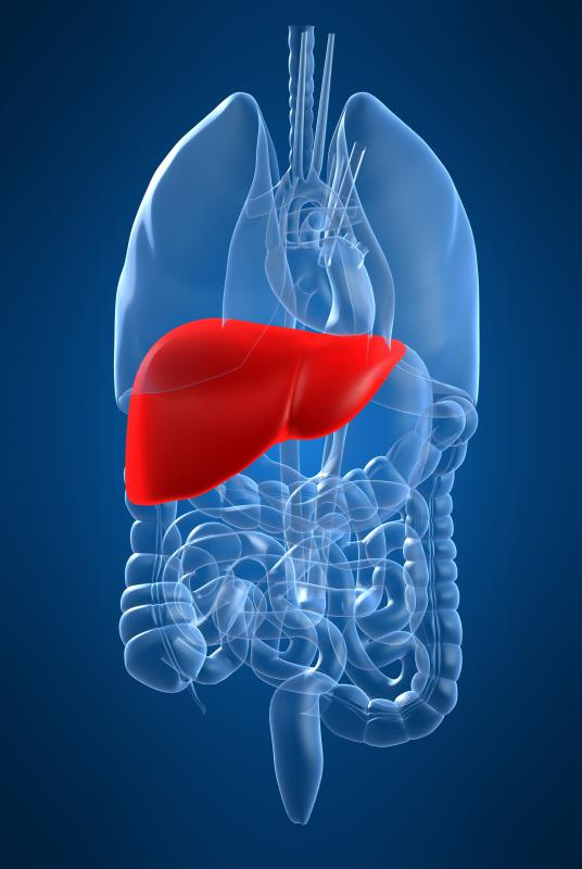 Various liver problems in people might be treated with liver extract.