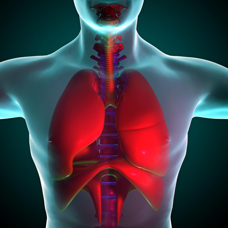 The lungs are connected to the mouth and nose by the trachea, also known as the windpipe.