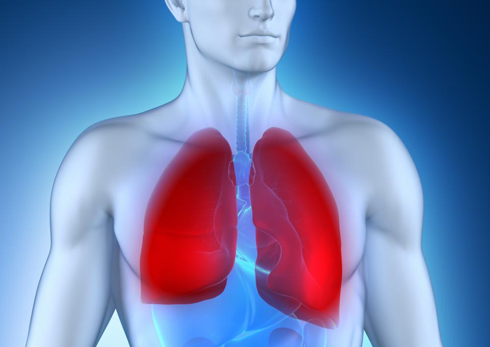 The lungs are key vital organs in the human body.