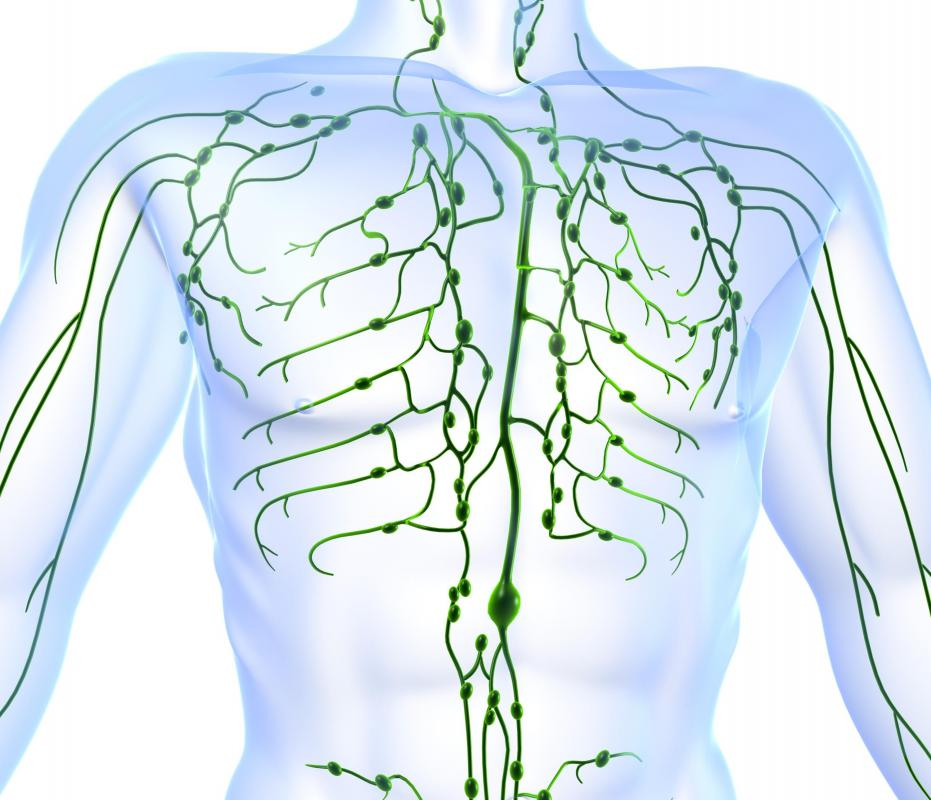 What Are The Axillary Nodes With Pictures