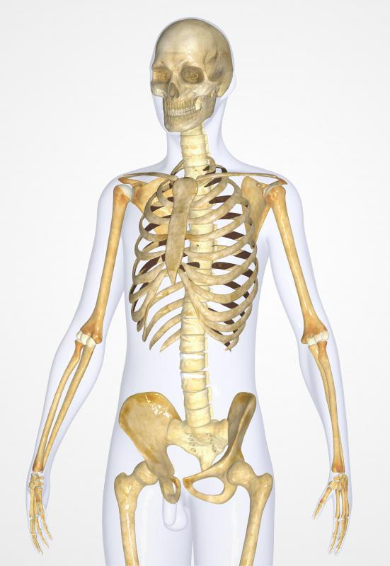 Joints in the skeletal system fit within one of three categories: fibrous, cartilaginous, and synovial joints.