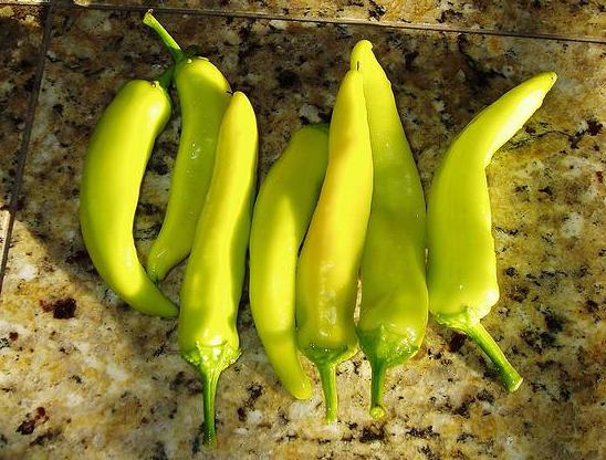 Peppers before being made into pepperoncini.