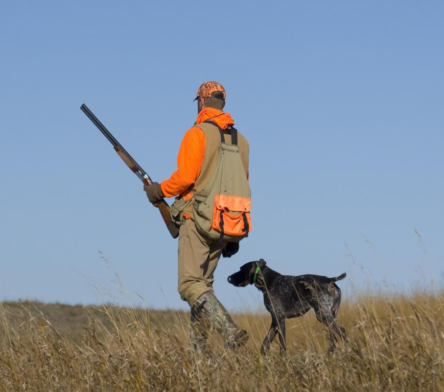 A dog writer might incorporate hunting stories into his work.