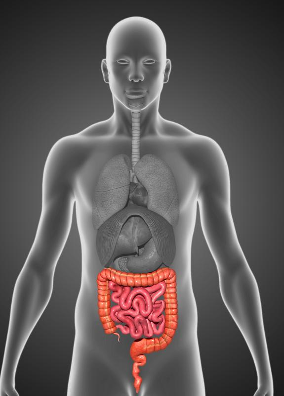 The large intestine holds waste until it is ready to be ejected from the body.