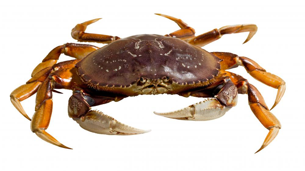 Some crabs can be algae eaters.