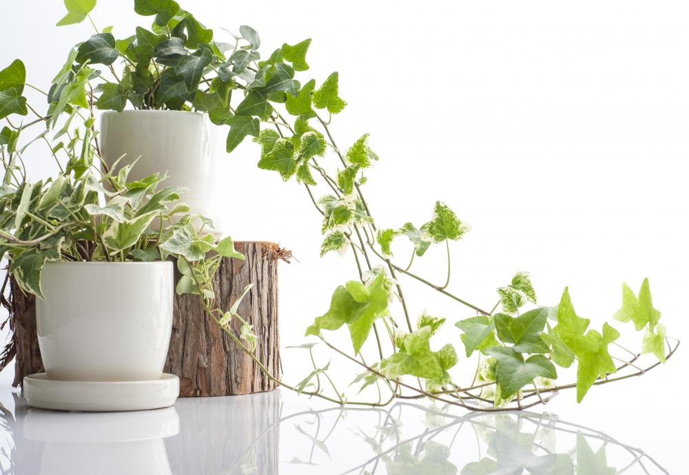 Indoor house plants need to be watered and tended to on a regular basis, so it is important to consider upkeep.