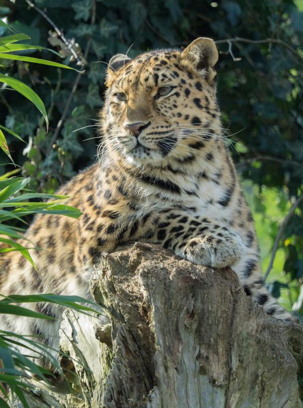 Jaguars Are The Largest Big Cats In The Americas.