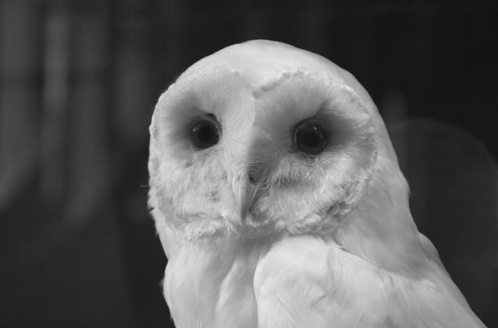 Owls are seen as symbols of wisdom in mythology.