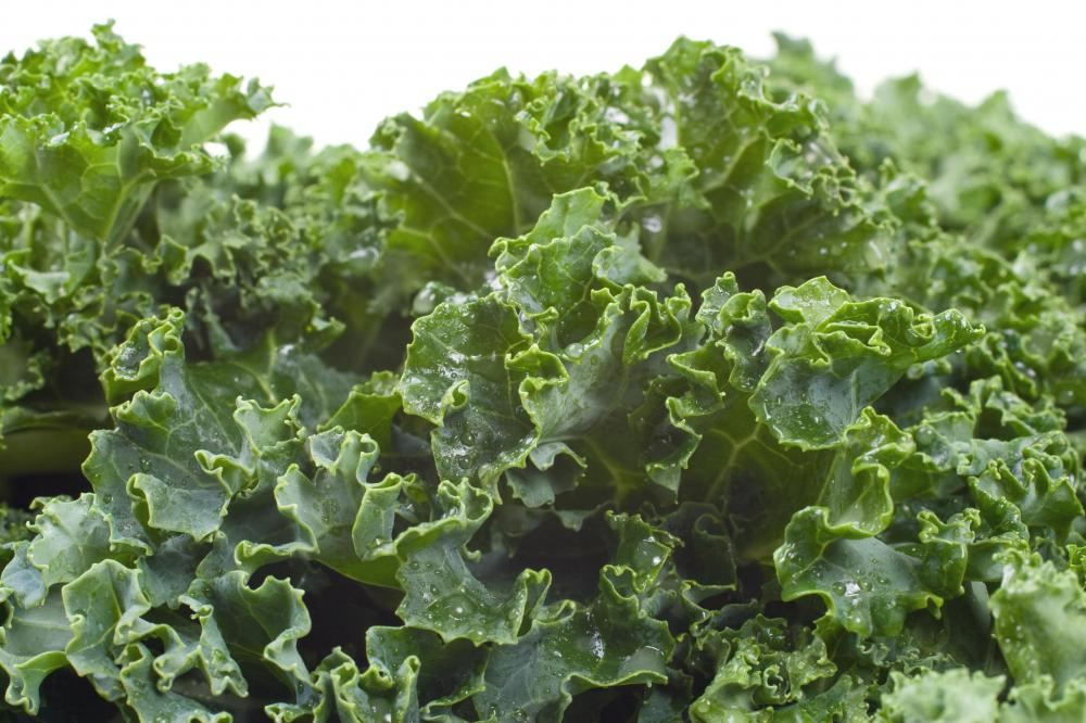 Kale, and other calcium-rich greens like chard and broccoli, make good turtle food.