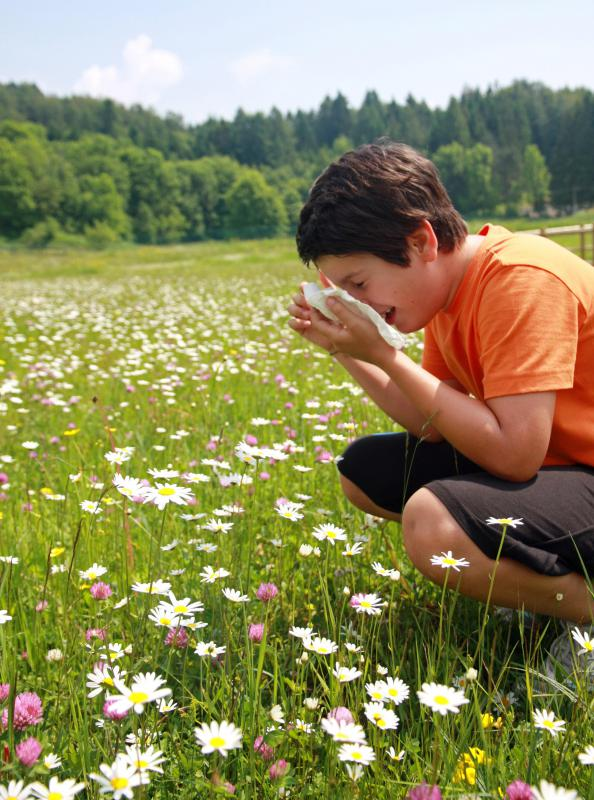 Seasonal allergies often lead to chronic post-nasal drip during allergy season.