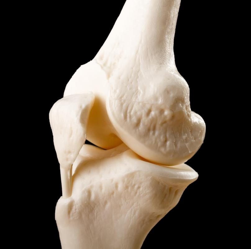The quadriceps tendon is found where four muscles attach to the kneecap.