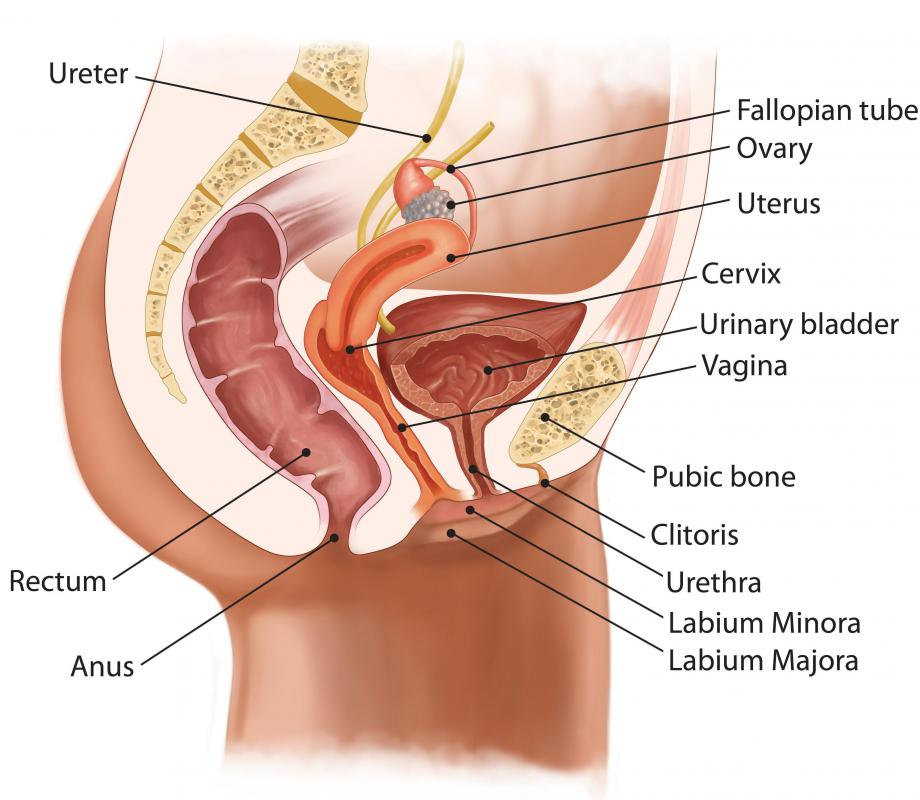 An anterior resection is a surgical procedure used to treat rectal cancer in the upper section of the rectum.