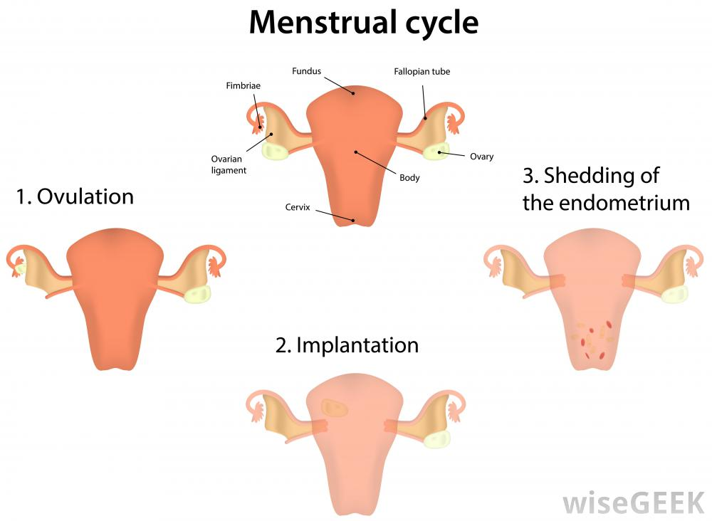 What is Egg White Cervical Mucus? (with pictures)