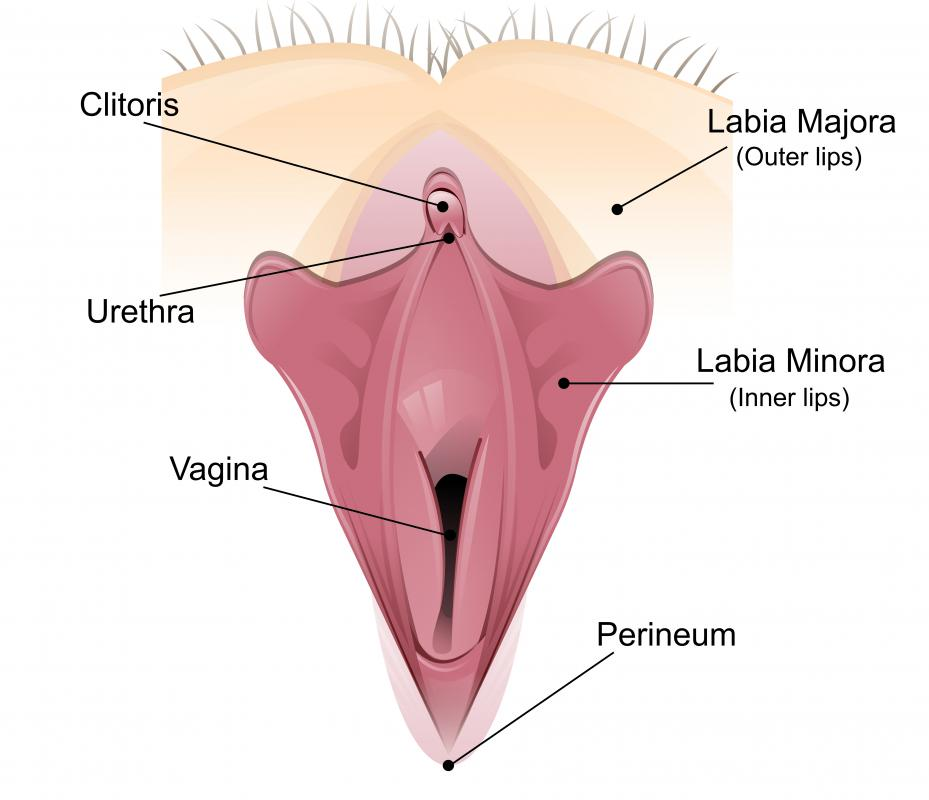 Labia strething involves pulling down the inner labia, or labia minora.