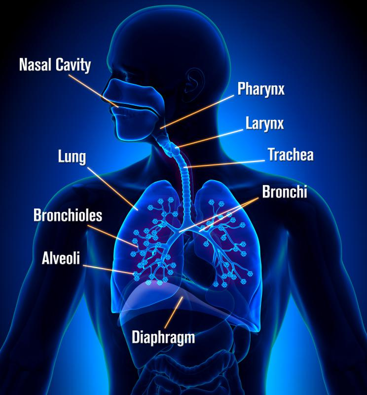 The lungs rid the body of carbon dioxide waste through the respiration process.