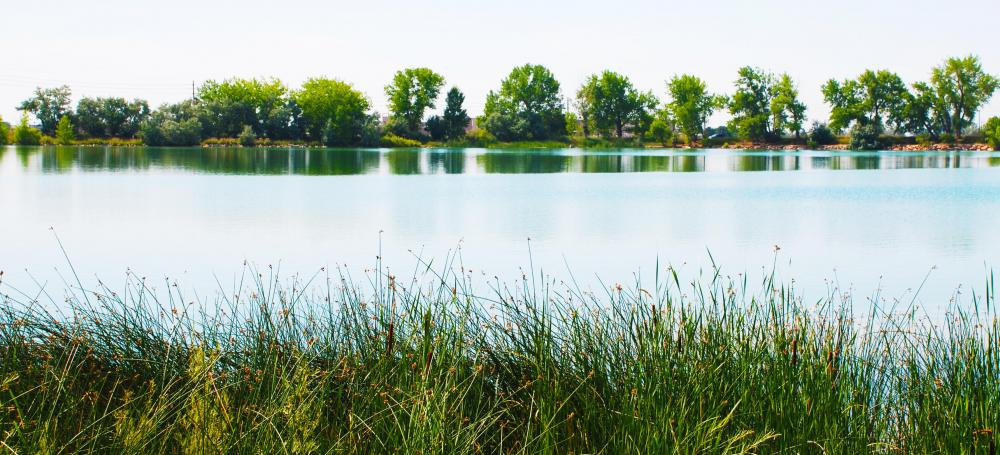 What Are the Different Types of Wetland Climates?