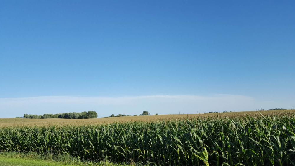 Corn is Iowa's premier crop and is mentioned prominently in the state's official and unofficial songs.