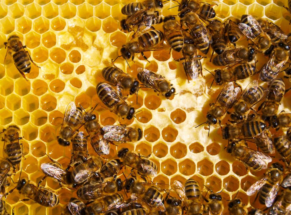 Bee stings may cause anaphylactic shock in some people.