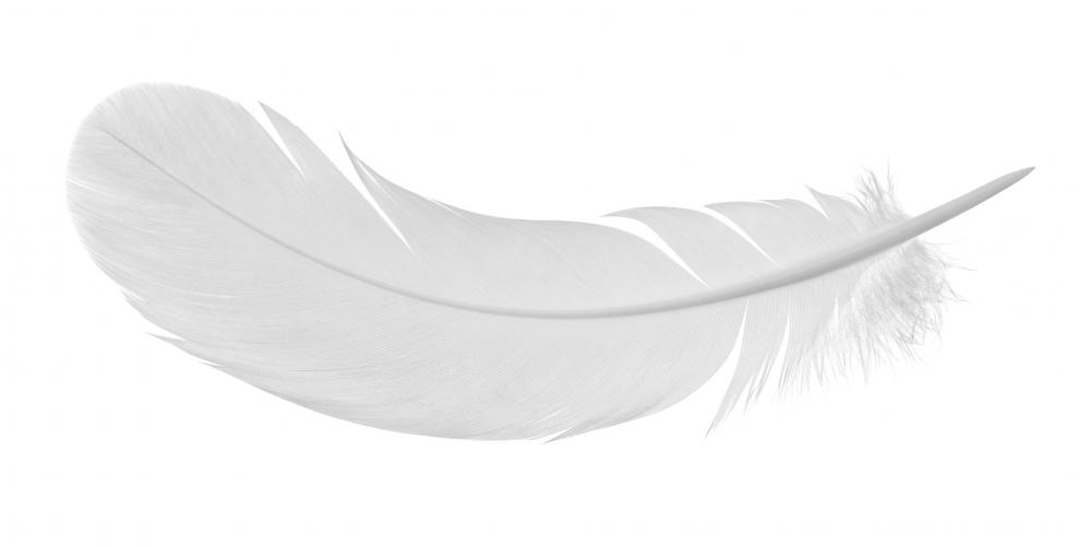 Feathers may be used to fill ski jacket anoraks.