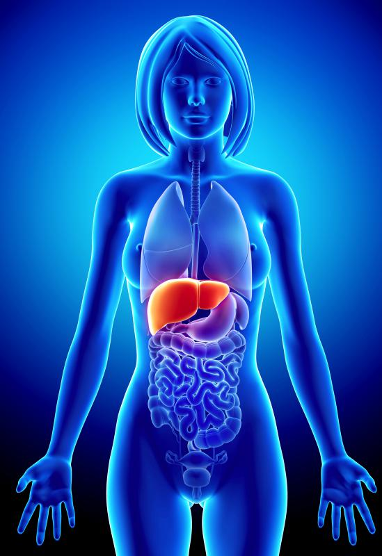The villi help transport nutrients to the liver.