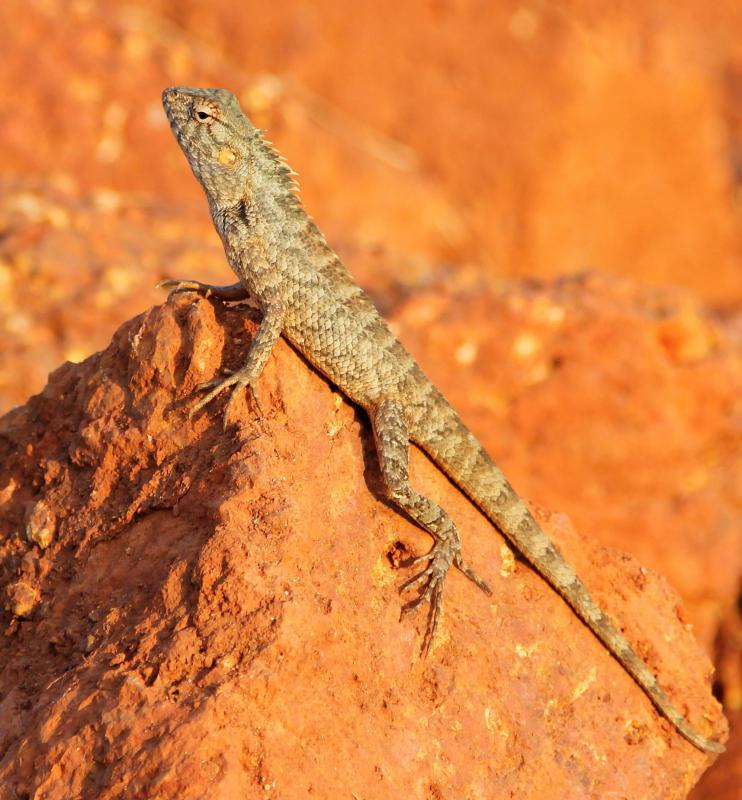 Lizards are cold-blooded, so they usually need a heated area to survive.