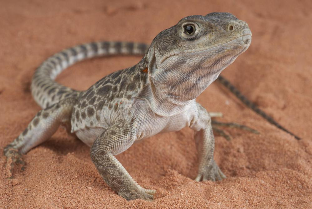Fish, insects, and leafy greens are different types of food for lizards.